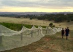 Isolated and windswept Grosset Gaia Vineyard: bird netting to keep 'roos out - Feb 2016