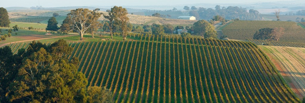 Grosset_Springvale_Vineyard